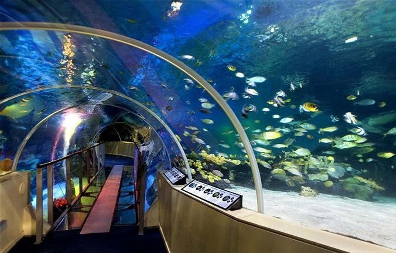 Sea Life London Aquarium Ourboox